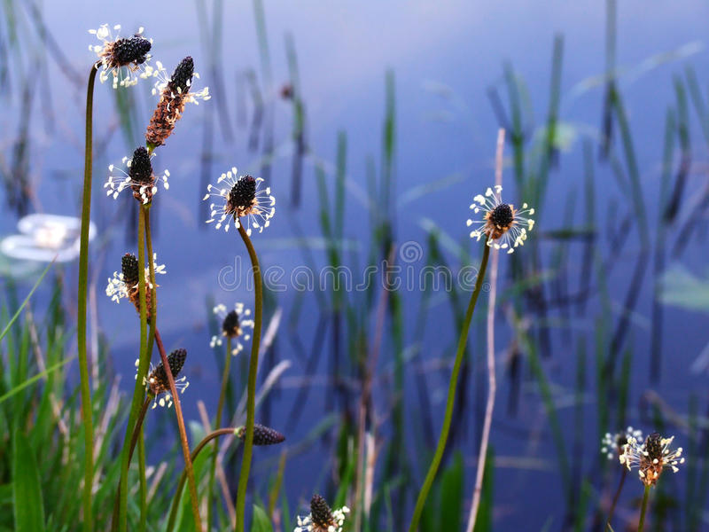 Wildflowers et eau image stock