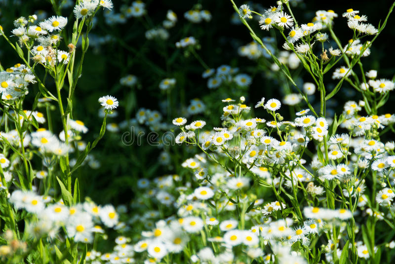 Wildflowers au soleil image stock