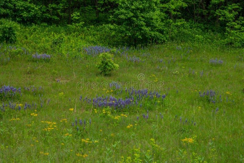 Wildflowers auf einem Gebiet im Frühjahr stockbilder