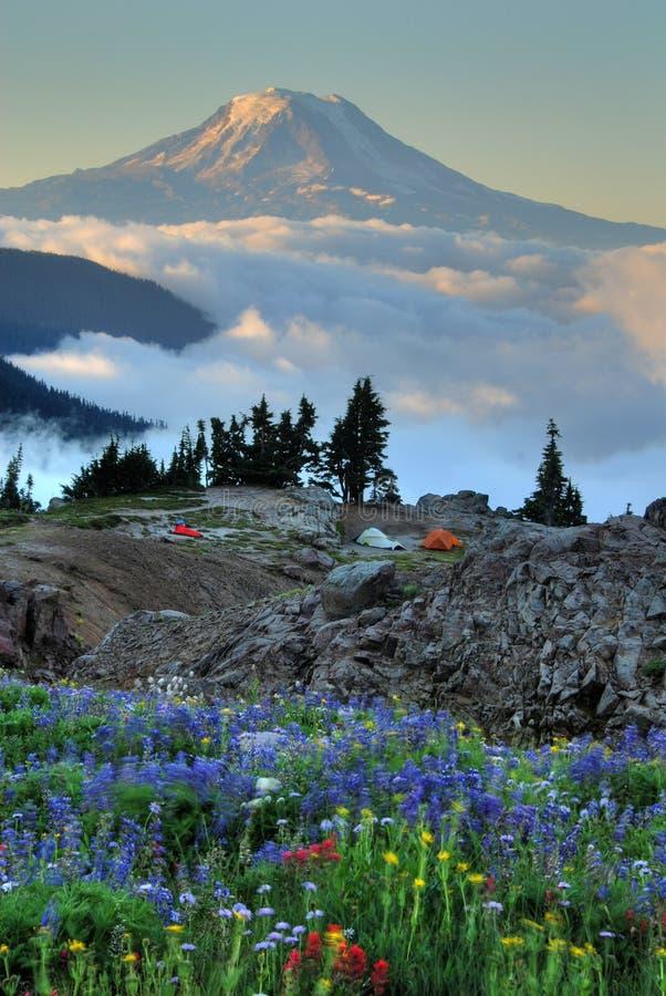 Wildflowers, barracas, Mt. Adams fotos de stock