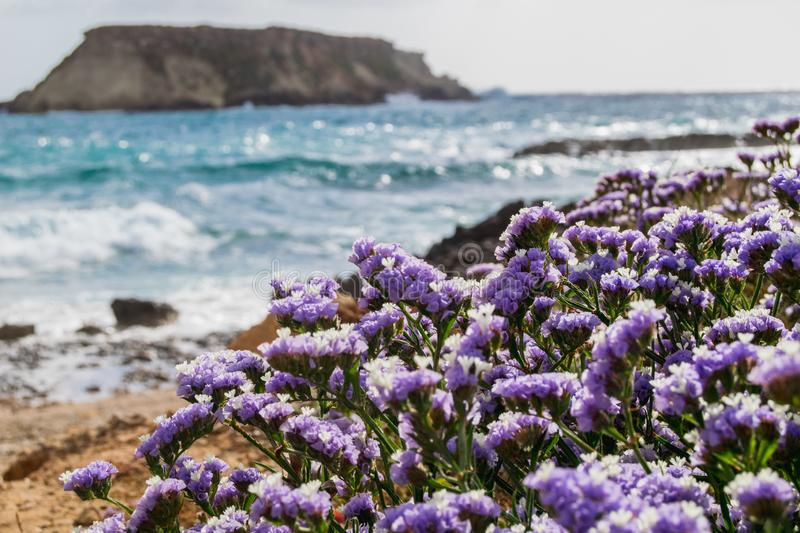 Wildflowers on the beach in Cyprus royalty free stock photos