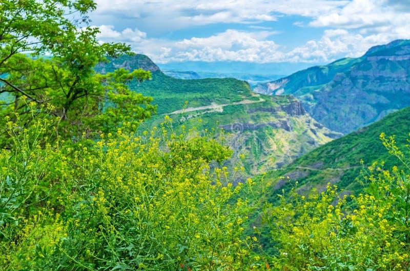 Wildflowers in bergen royalty-vrije stock foto's