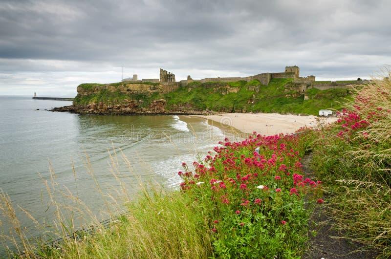 Wildflowers bij strand Tynemouth royalty-vrije stock afbeelding
