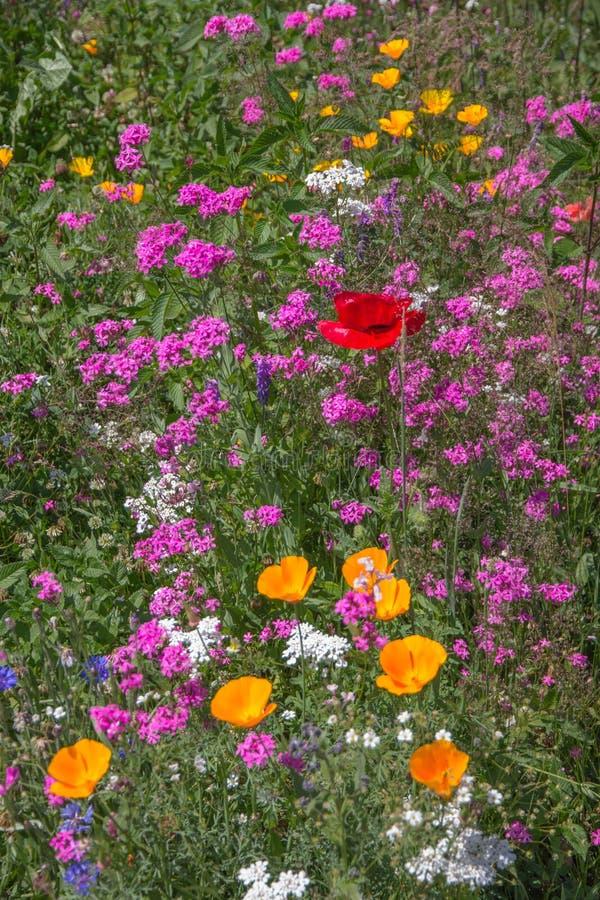 Wildflowers blisko Titisee, Niemcy zdjęcie stock