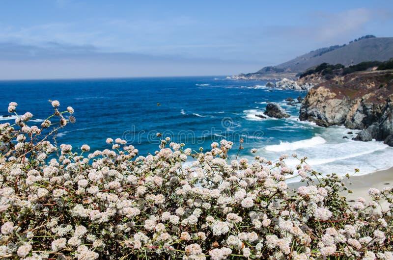 Wildflowers in bloei langs de Vreedzame Kustweg in Californië dichtbij Big Sur stock foto's