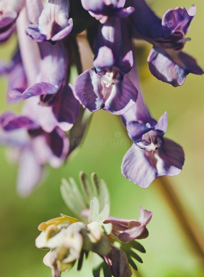 Wildflowers blu e radura soleggiata fotografie stock