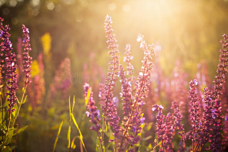 Wildflowers bonitos da mola fotos de stock royalty free