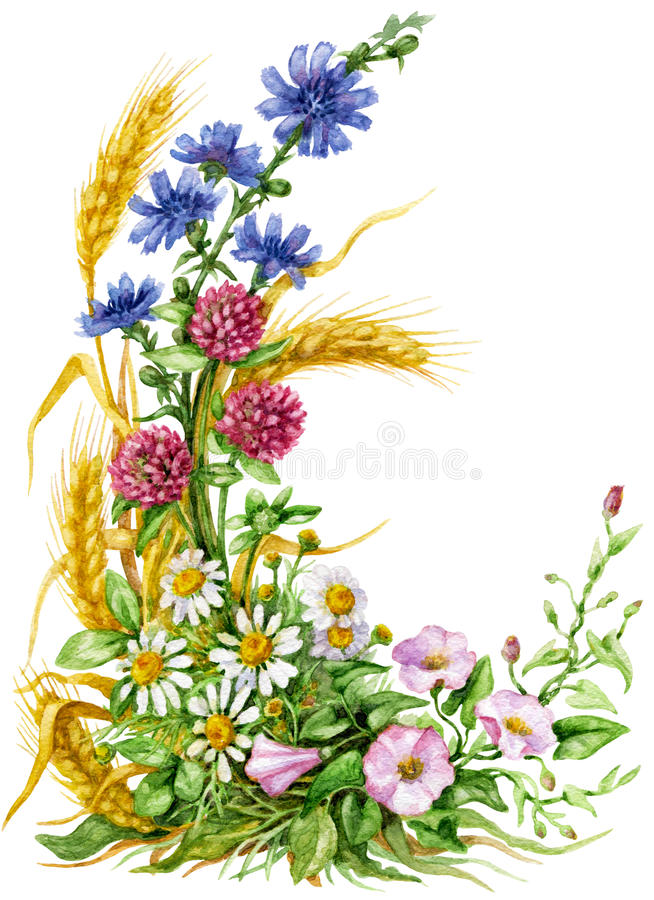 Wildflowers bouquet vector illustration