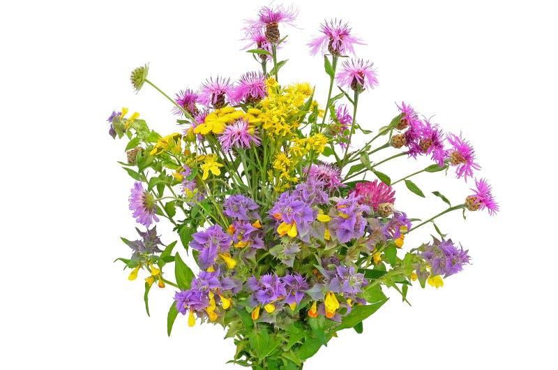 Wildflowers bukiet obrazy royalty free