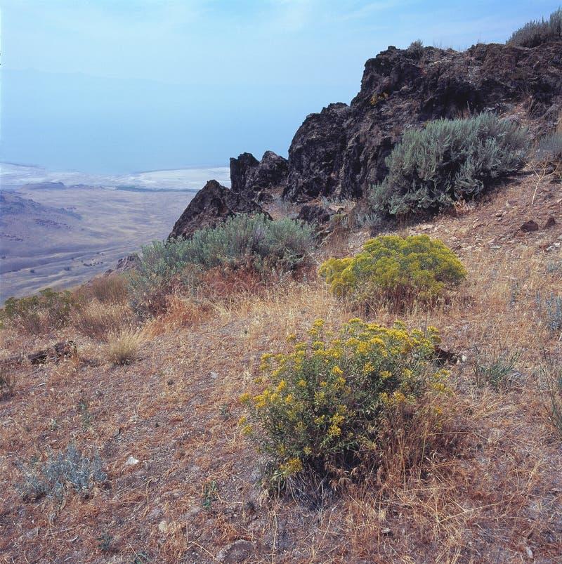 Wildflowers cerca de la cumbre del pico de Stringham, isla del antílope, Great Salt Lake, Utah fotografía de archivo