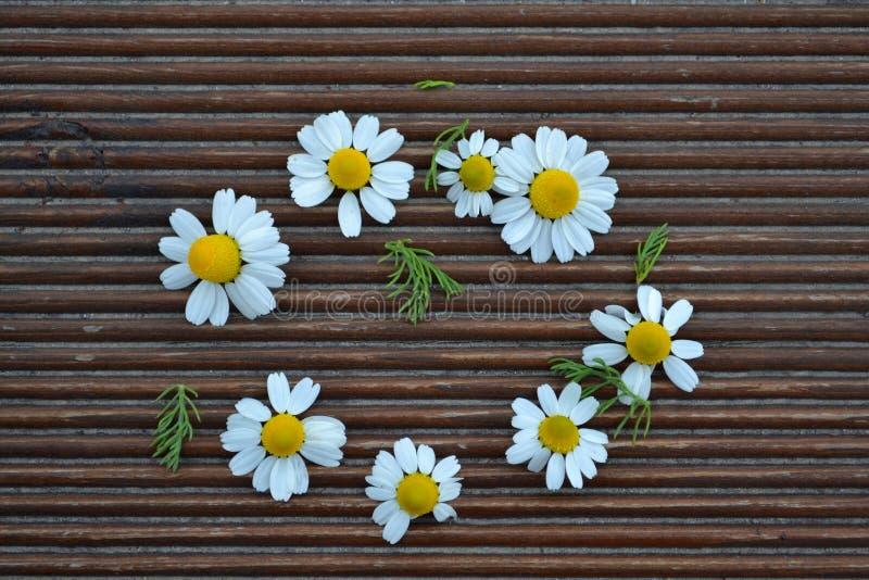 Wildflowers chamomile obraz stock
