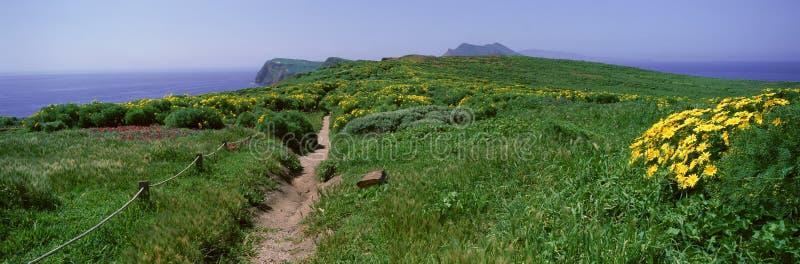 Wildflowers, channel islands, Kalifornia obraz royalty free