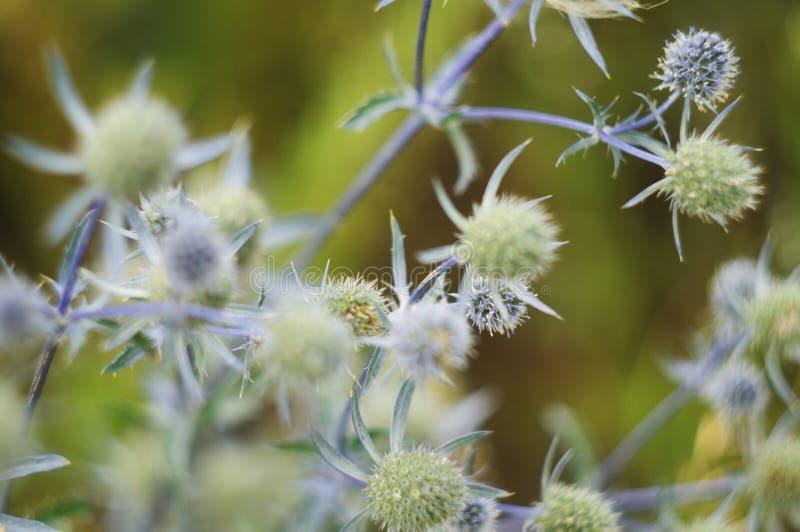 Wildflowers close-up stock photo