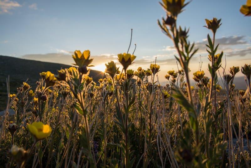 Wildflowers in Colorado stock foto