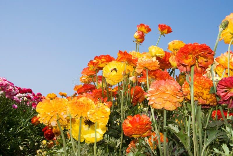 Wildflowers coloridos imagens de stock