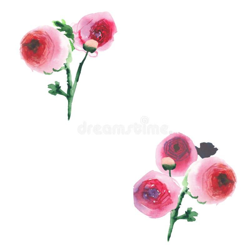 Wildflowers coloridos da mola erval floral bonita maravilhosa sofisticada bonito bonita elegante cor-de-rosa e rosas vermelhas co ilustração stock