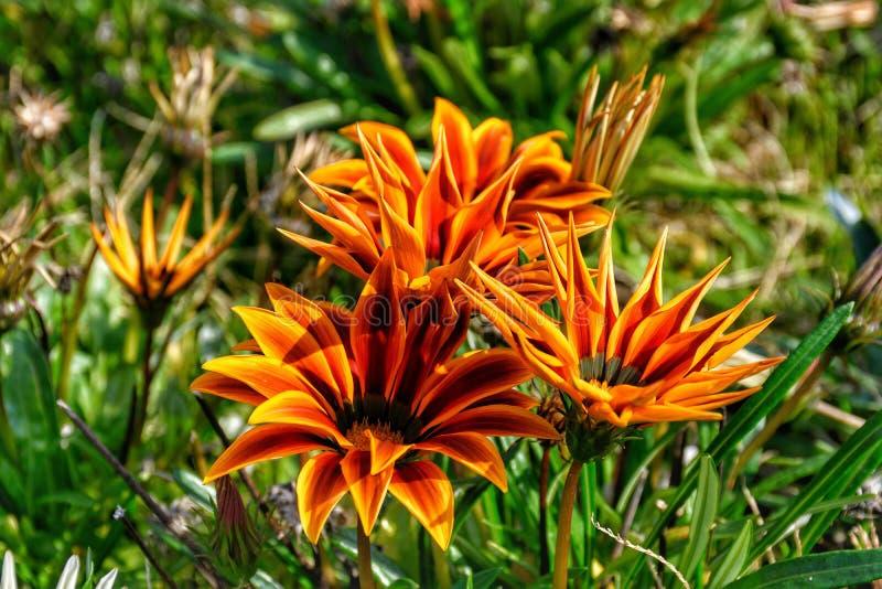 Wildflowers com grama imagem de stock
