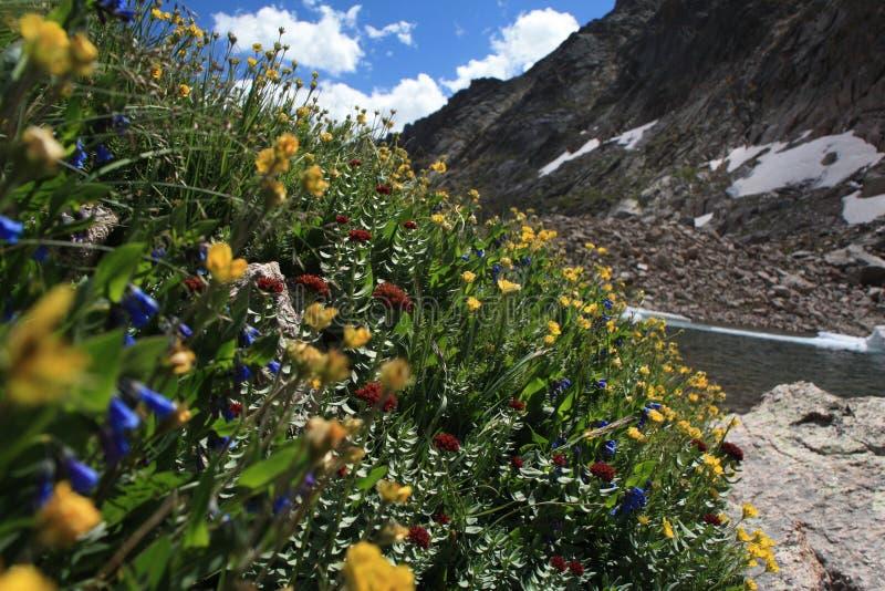 Wildflowers contre un lac froid de montagne du Colorado photos stock