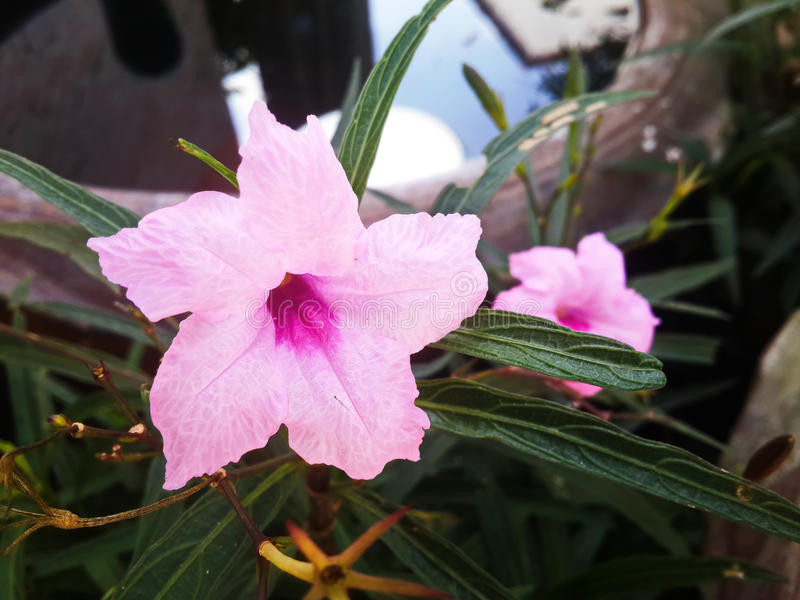 Wildflowers cor-de-rosa fotografia de stock royalty free