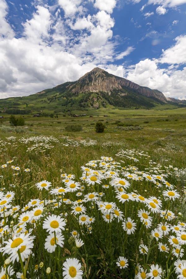 Wildflowers crêtés de butte image libre de droits