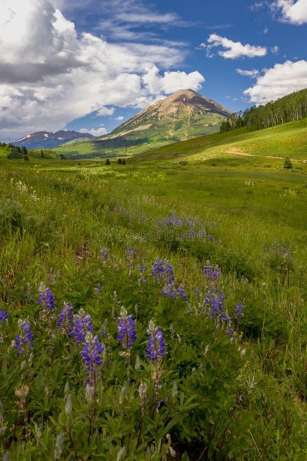 Wildflowers crêtés de butte images libres de droits