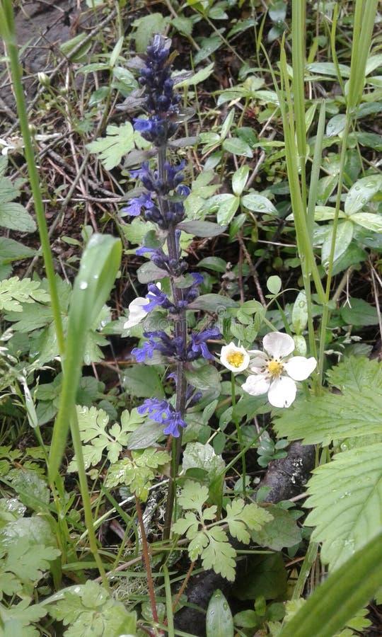 Wildflowers crescidos país foto de stock