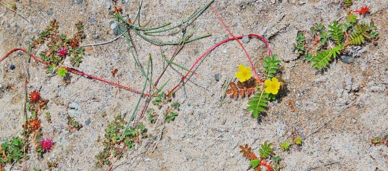 Wildflowers da costa de Oregon fotografia de stock royalty free