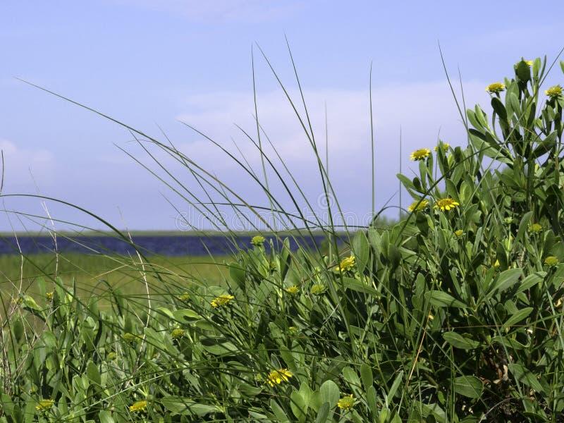 Wildflowers da ilha de North Carolina fotografia de stock