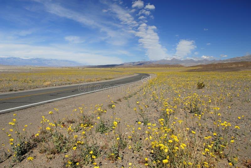 Wildflowers da mola em Death Valley fotos de stock
