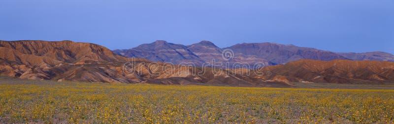 Wildflowers da mola, o Vale da Morte, Califórnia foto de stock royalty free
