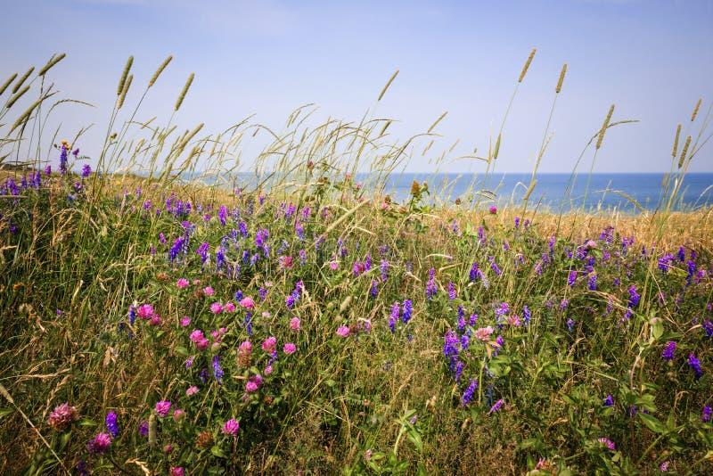 Wildflowers dans le pré d'été photo libre de droits