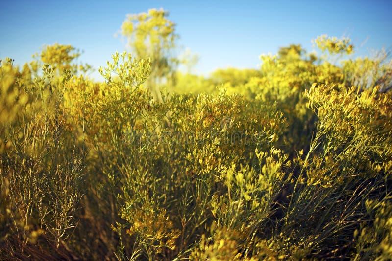 Wildflowers de Arizona fotos de archivo libres de regalías