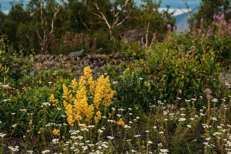 Wildflowers in de bergen royalty-vrije stock foto's