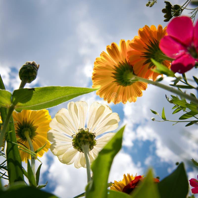 Wildflowers de Brigt au-dessus de ciel photo libre de droits