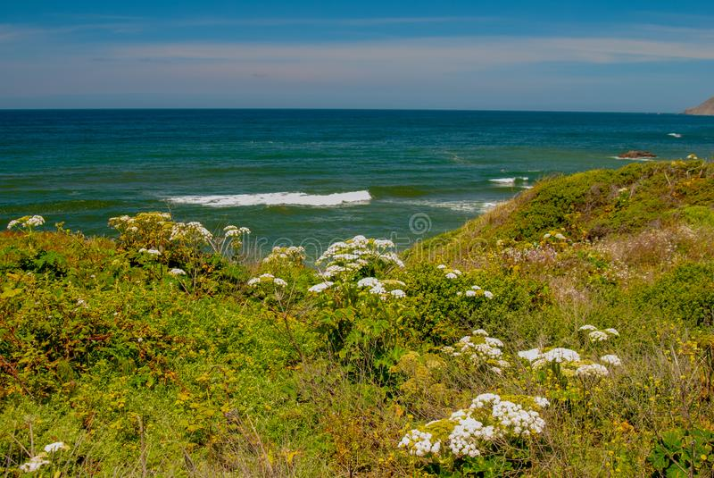 Wildflowers de côte de Mendocino photo stock