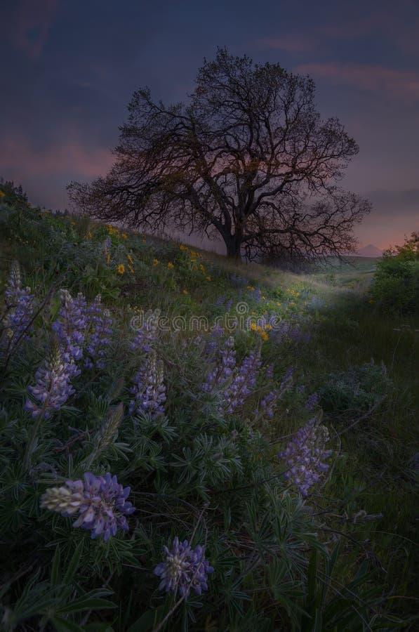 Wildflowers de la garganta del río Columbia foto de archivo