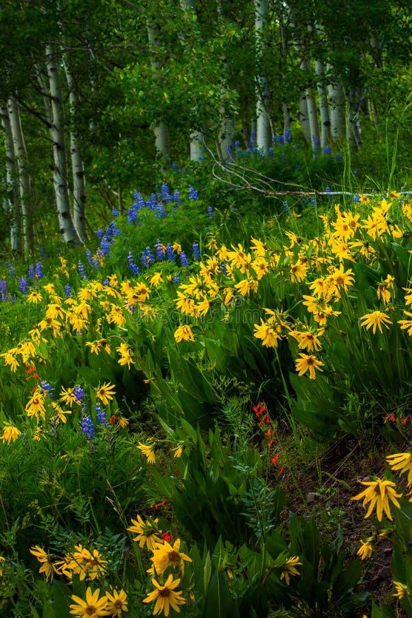 Wildflowers de la mota con cresta fotografía de archivo