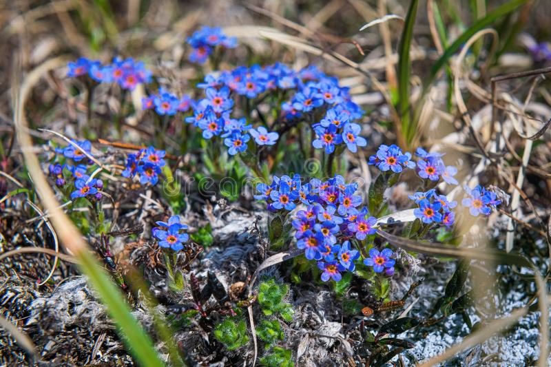 Wildflowers de montagne image stock