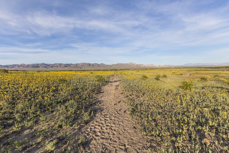 Wildflowers de ressort de désert de Mojave près de cratère d'Amboy photographie stock libre de droits