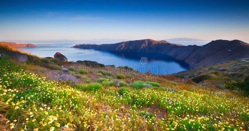 Wildflowers de Santorini foto de archivo