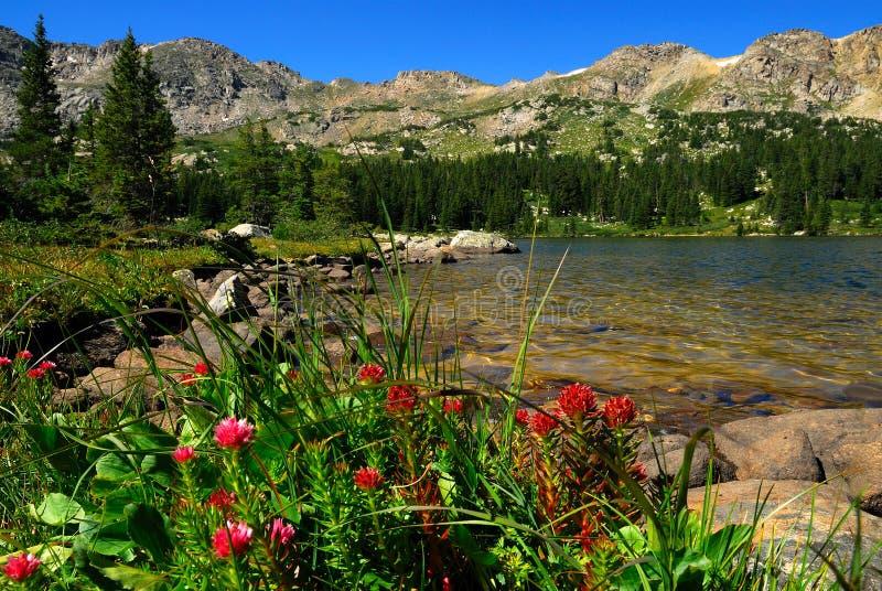 Wildflowers del Colorado fotografia stock
