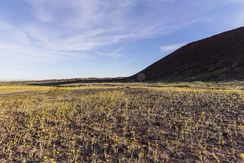 Wildflowers del desierto de Mojave debajo del cráter de Amboy fotografía de archivo libre de regalías