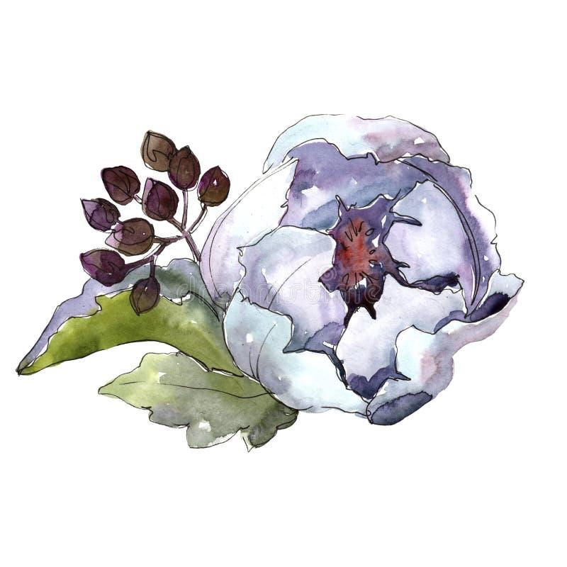 Wildflowers del mazzo in uno stile dell'acquerello isolati royalty illustrazione gratis
