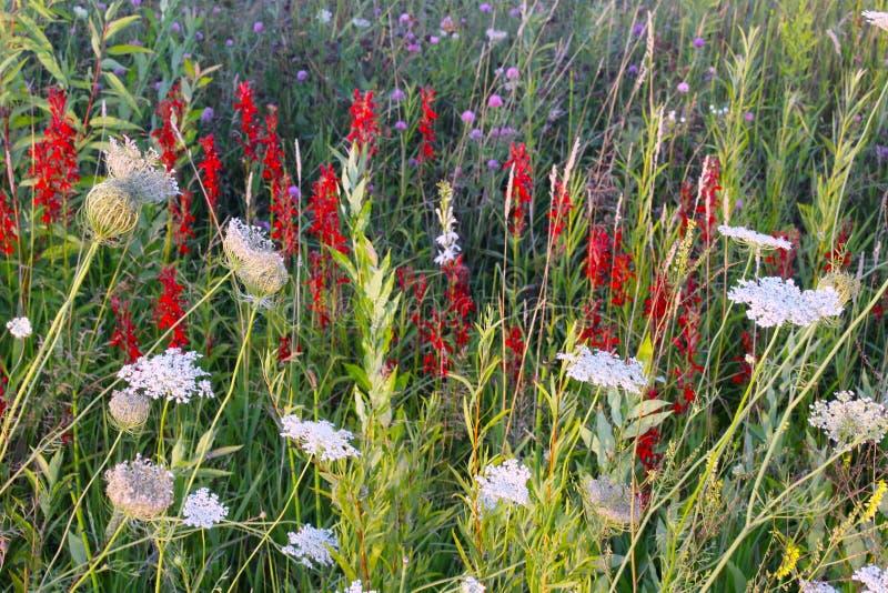 Wildflowers del Michigan fotografie stock