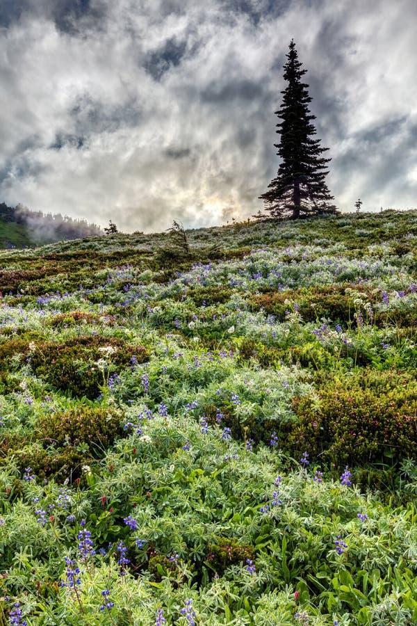 Wildflowers del monte Rainier immagine stock libera da diritti