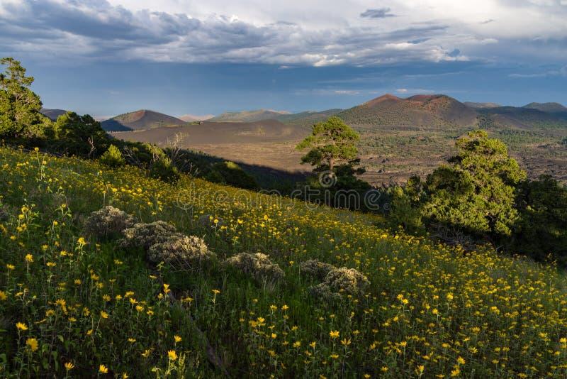 Wildflowers Del Verano Al Este De Los Picos Dominio Público Y Gratuito Cc0 Imagen