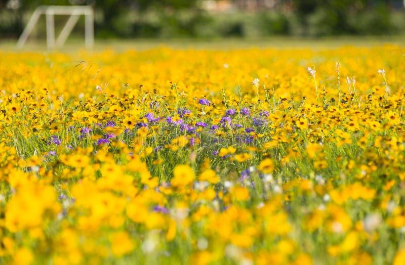 Wildflowers delante de Texas Soccer Field imagen de archivo libre de regalías
