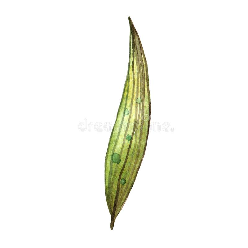 Wildflowers dell'acquerello Foglio verde isolato illustrazione di stock