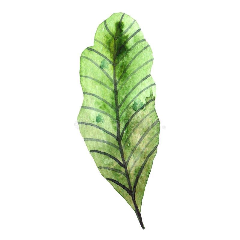 Wildflowers dell'acquerello Foglio verde isolato illustrazione vettoriale