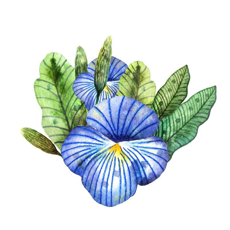 Wildflowers dell'acquerello Mazzo isolato delle viole del pensiero e della pianta blu illustrazione di stock